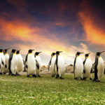 Penguins-World-Day