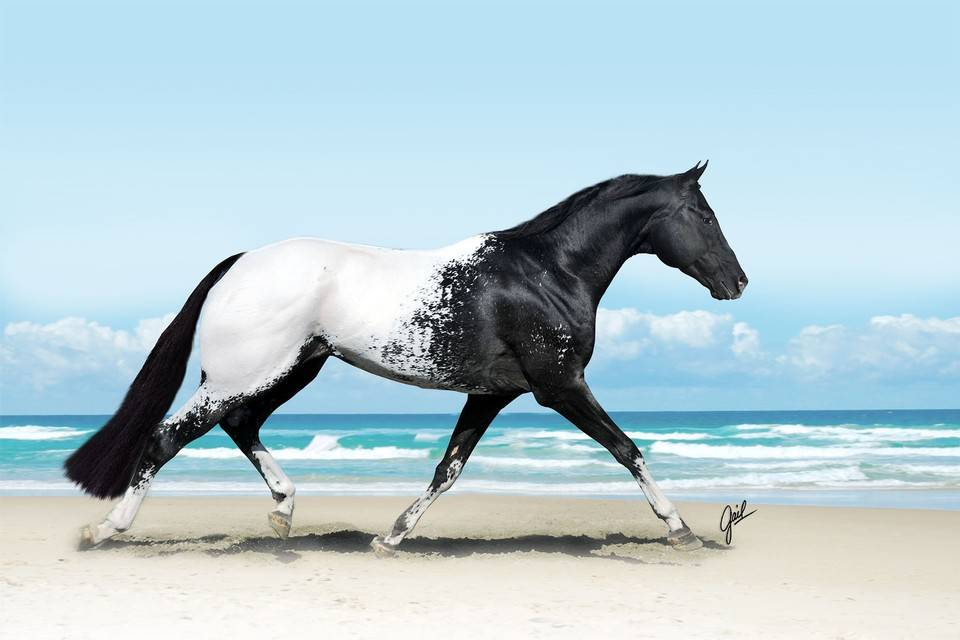 http://www.freshboo.com/wp-content/uploads/2014/04/beautiful-horse.jpg
