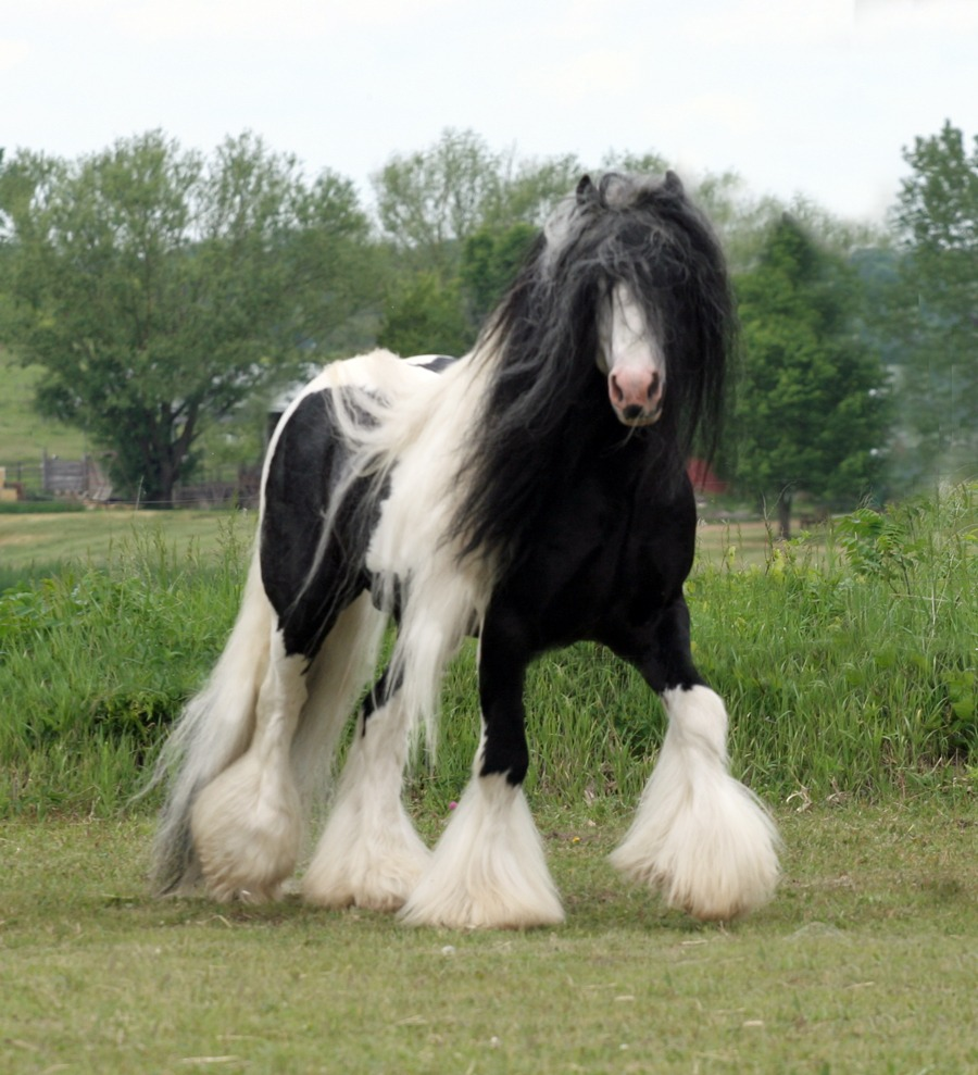 25 Majestic and Beautiful Horse Pictures - photo#25