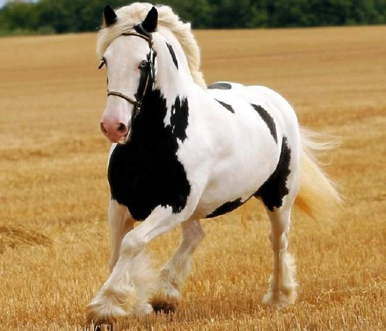 classy Beautiful horse pictures