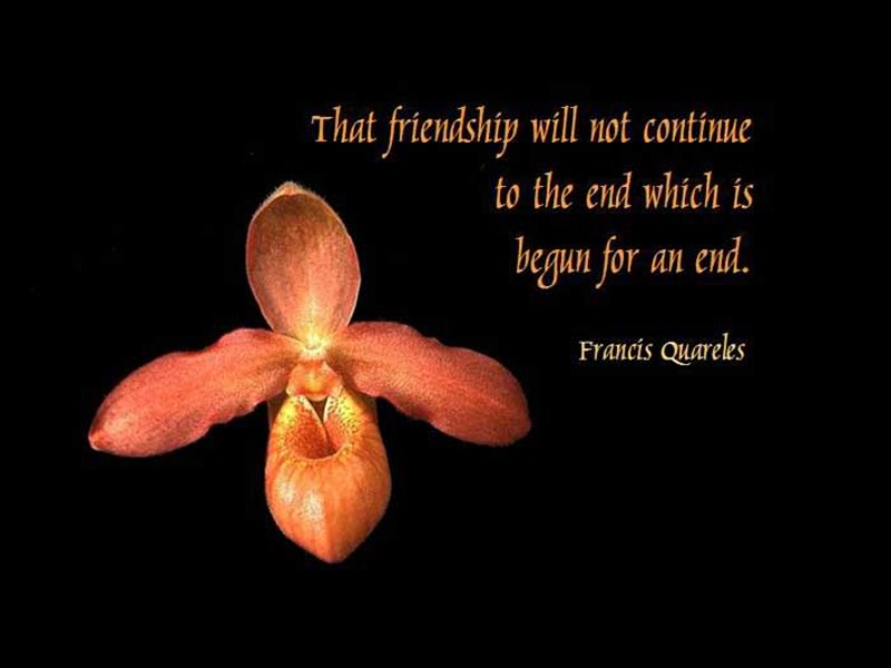 Cute Short Quotes About Friendship HD Wallpapers Unique Cute Short Quotes About Friendship