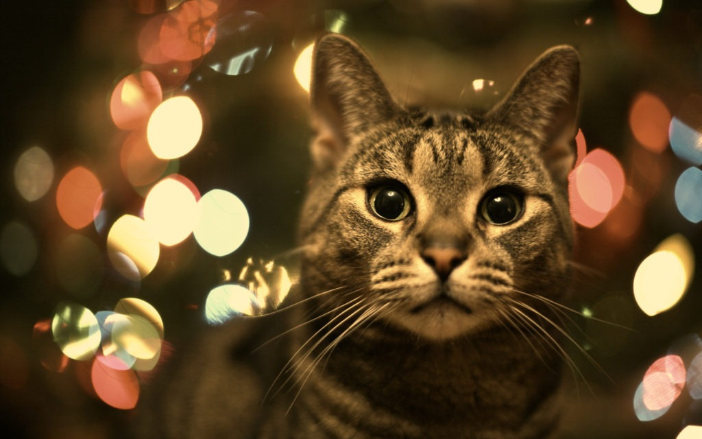 Christmas-cat-wallpapers