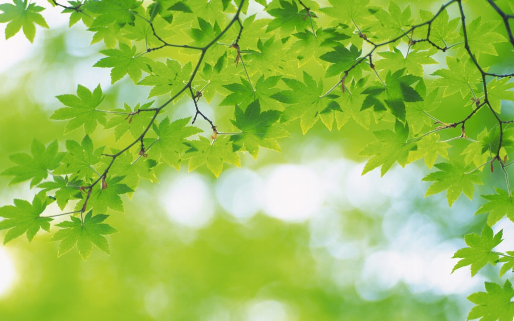 Fresh Leaves Desktop Background