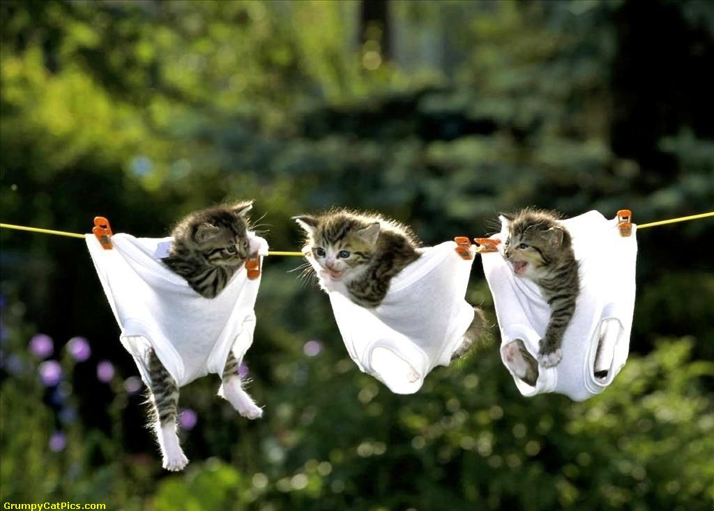 Little-Kittens-Out-To-Get-Dry