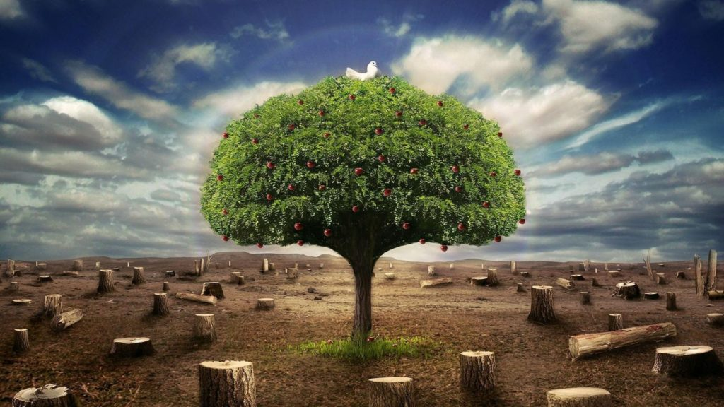 Global Warming and Lonely Tree