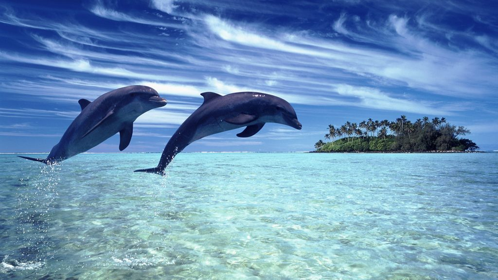 Water, Clouds and Dolphins Wallpaper