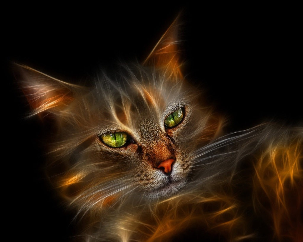 Windows_7_Wallpaper_Cat