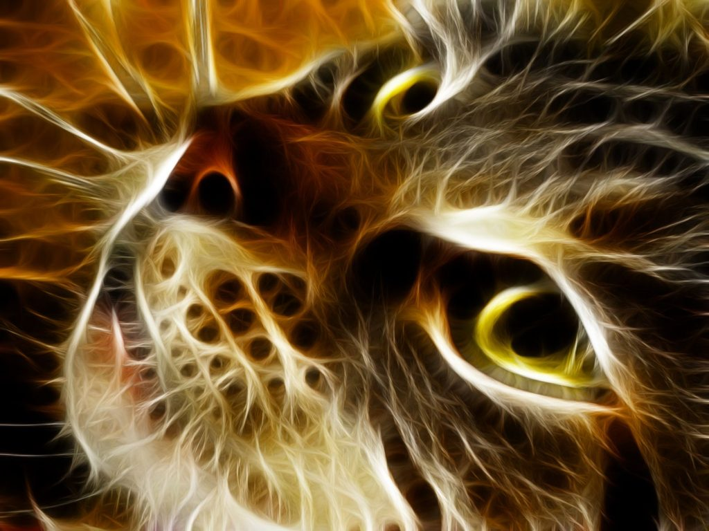 abstract cat wallpaper