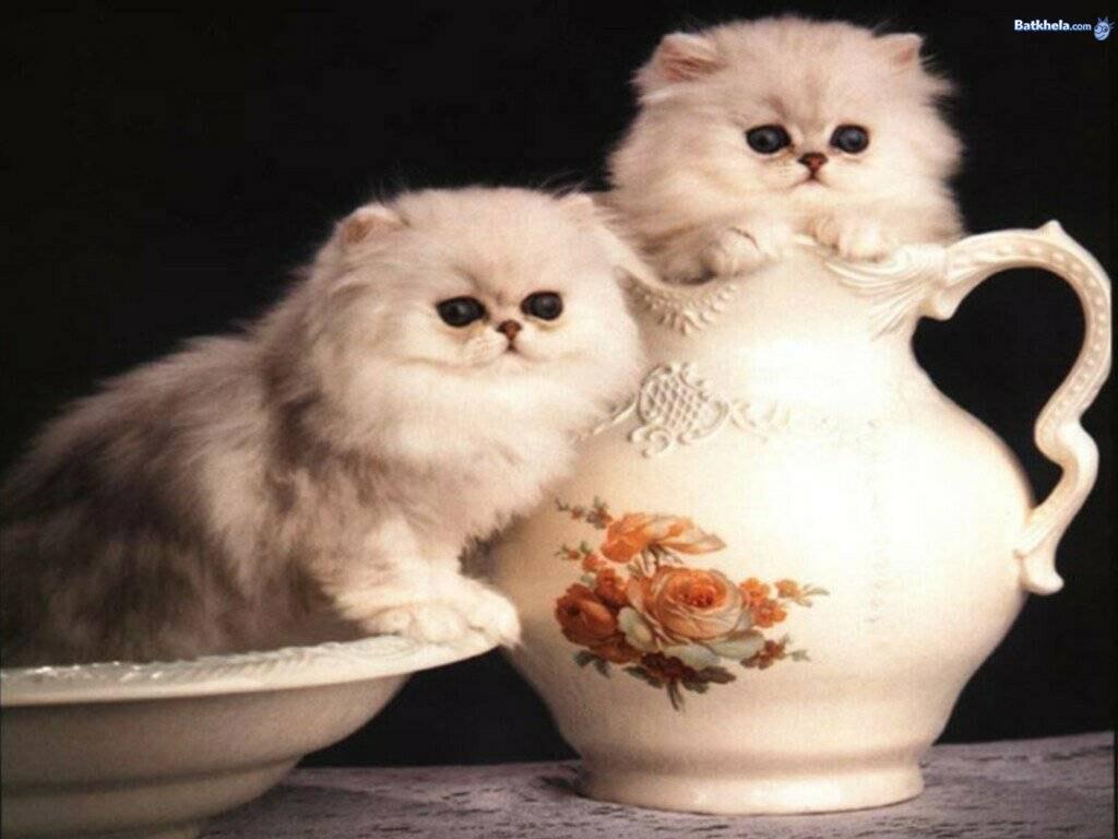 freakin-cute-cats
