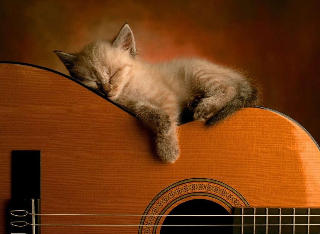 guitar-Cat-Wallpapers