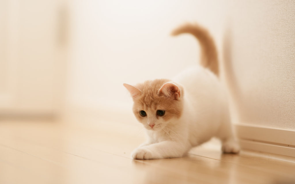 little cat wallpaper