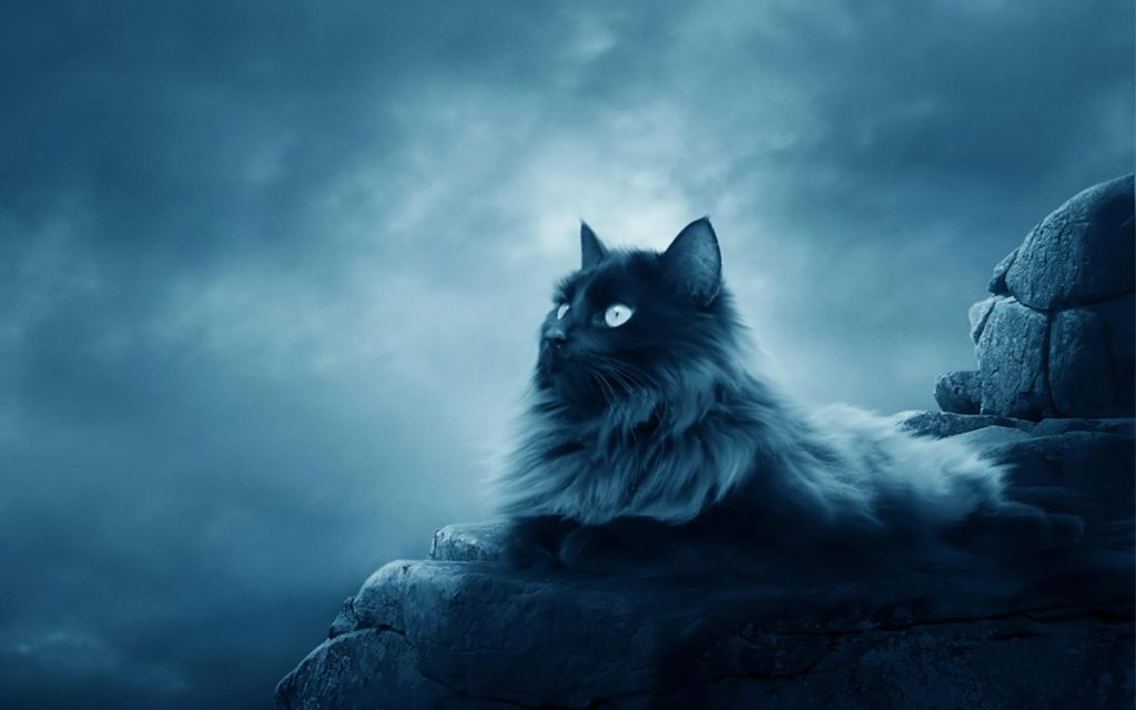 maine-coon-beautiful-cat-wallpapers