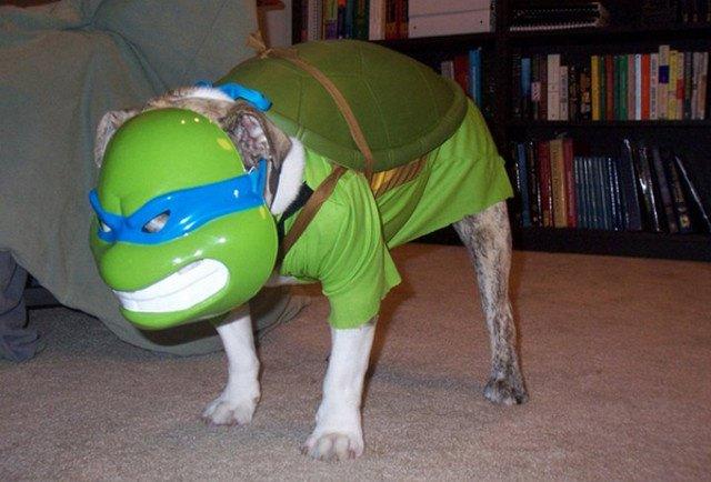 ninja-turtle-dog-costume & 50 Absolutely Amazing Dog Costume Ideas