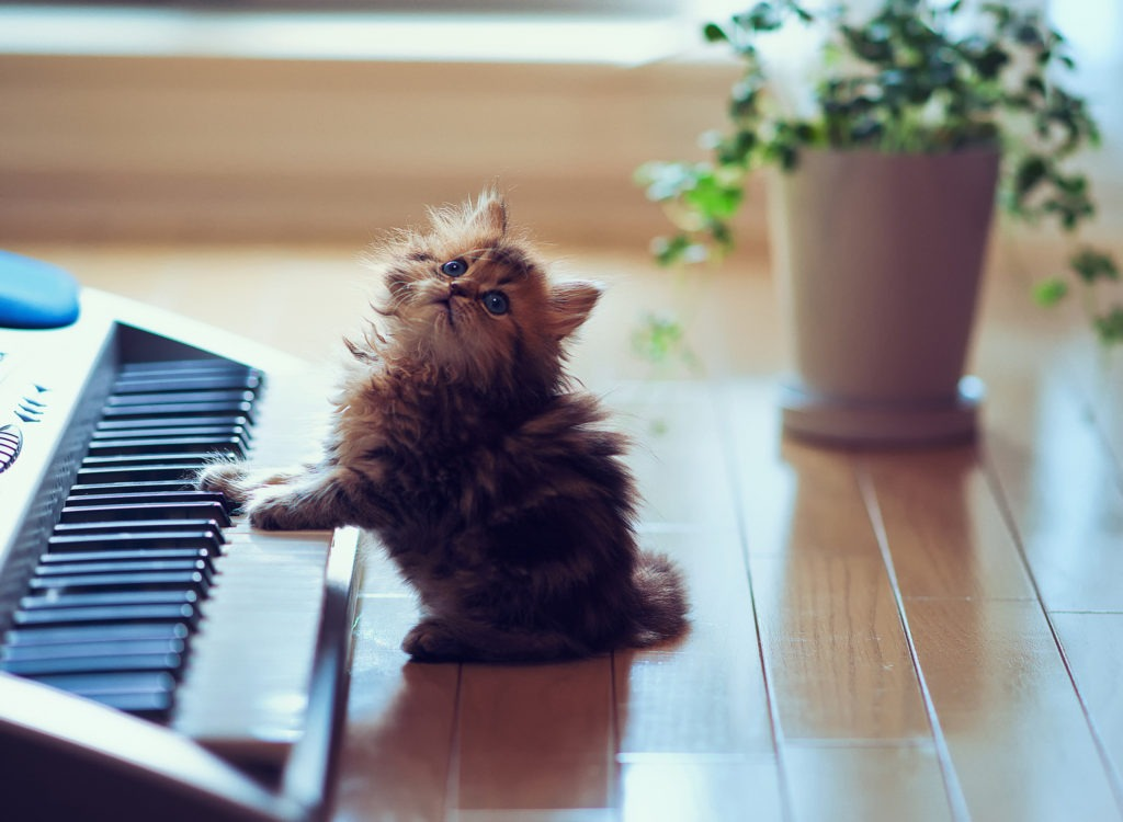 piano cat wallpaper