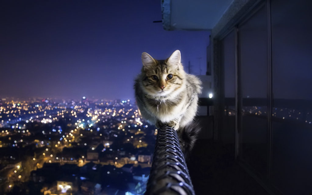 terrace cat wallpaper
