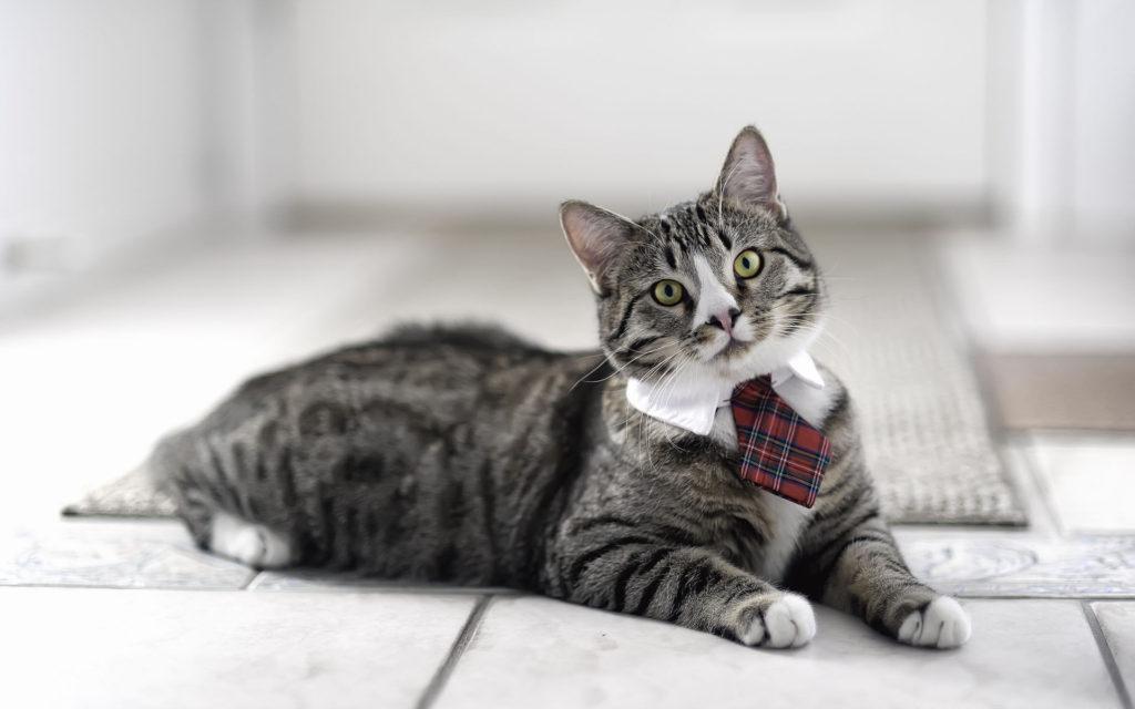 tie cat