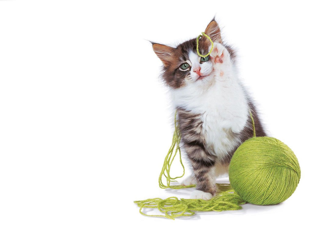 woollen ball cat wallpaper