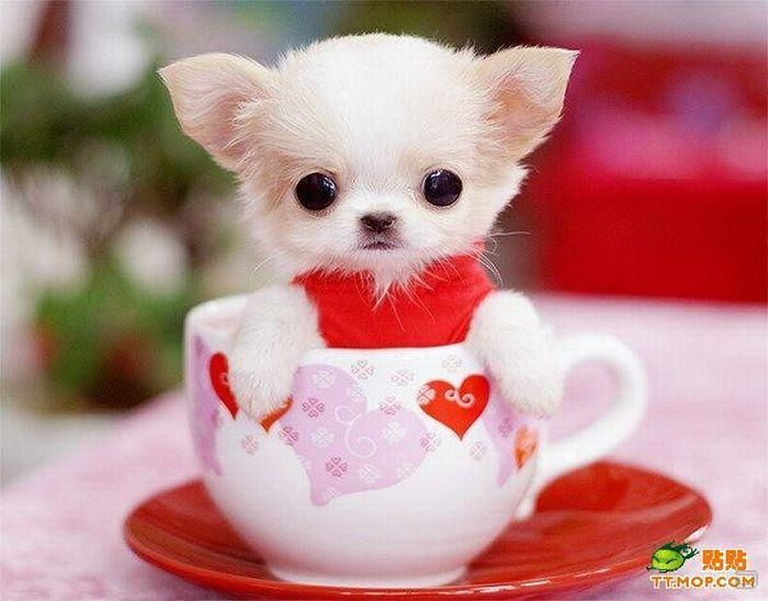 cute-dog in cup