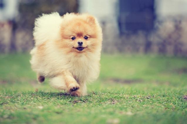 cute-dog