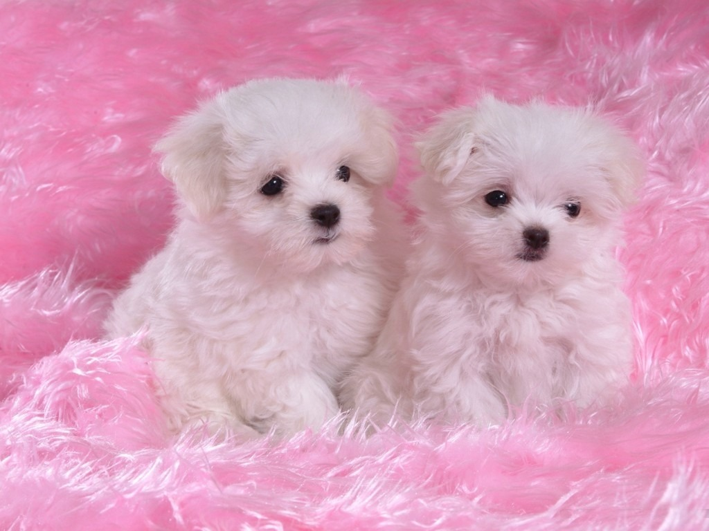 cute-dogs-and-puppies-wallpaper