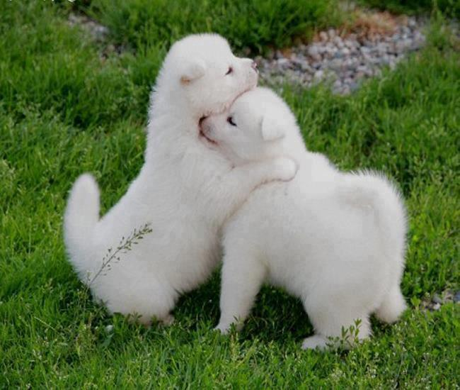cute dogs hugging