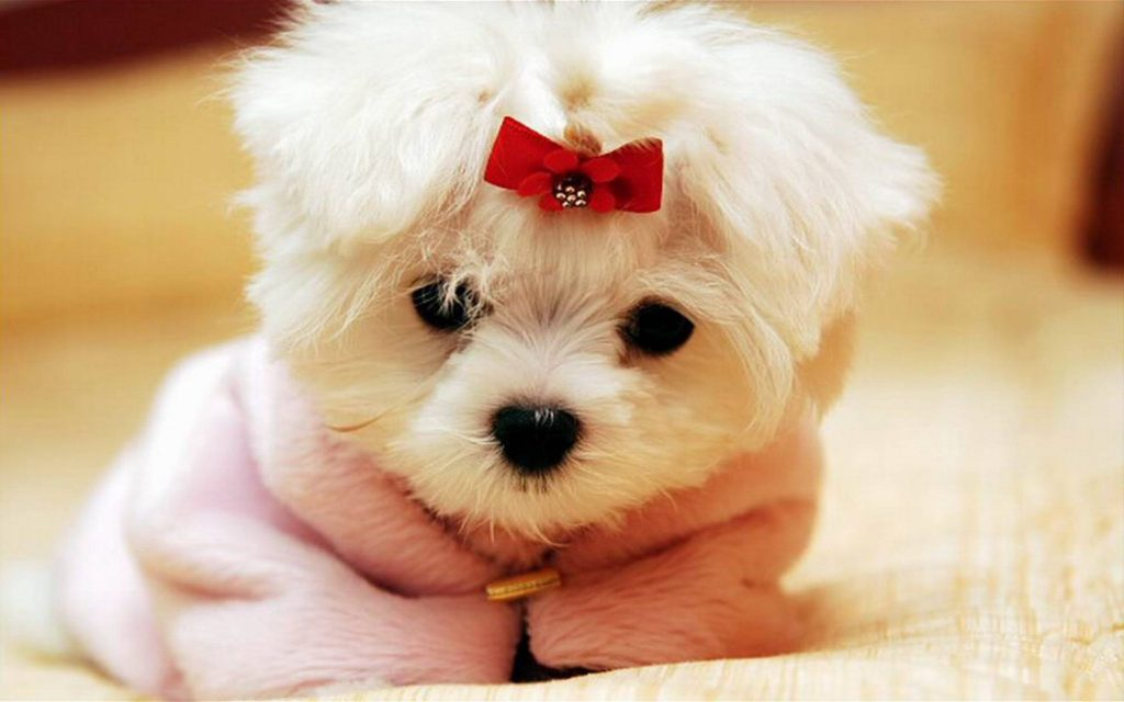 cute-dogs pictures
