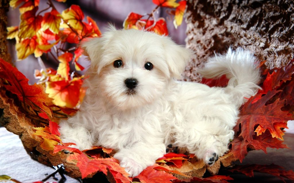 cute-lovely-white-dog