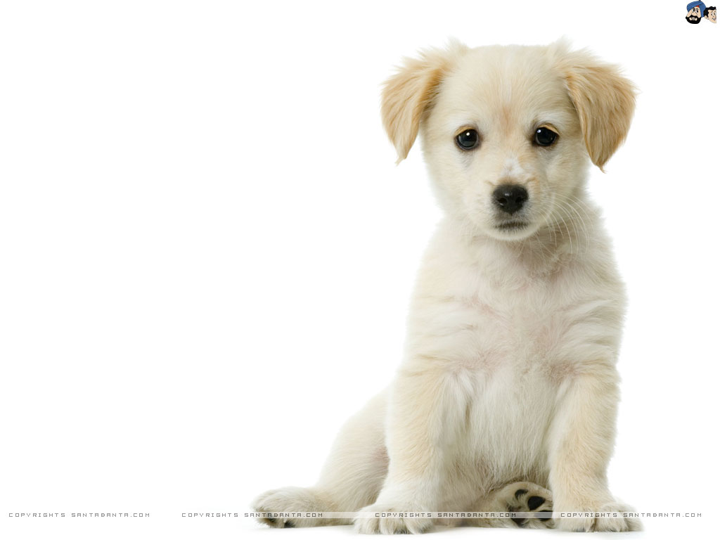 dogs-pics