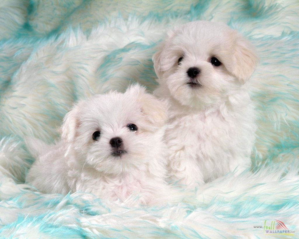 50 Cute Pictures Of Dogs And Puppies