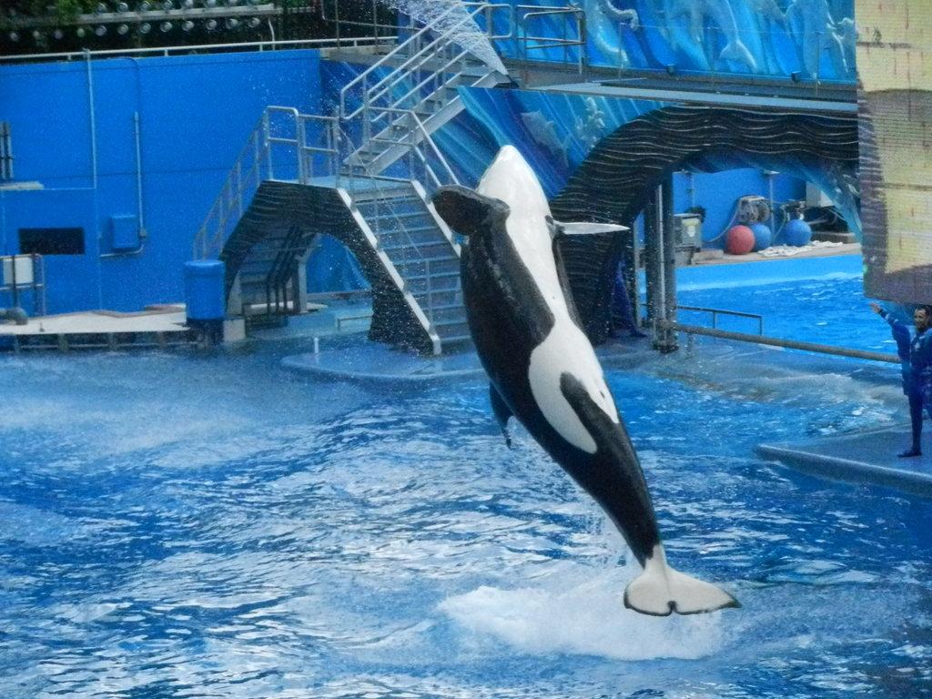 killer whale backwards jump