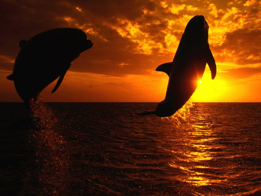 killer whale pictures sunset