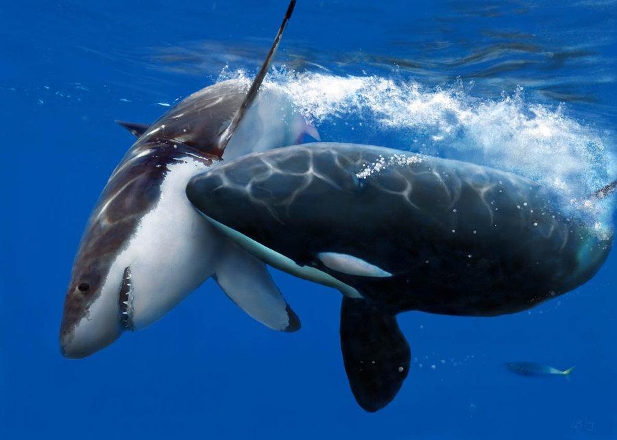 ocra killer whales