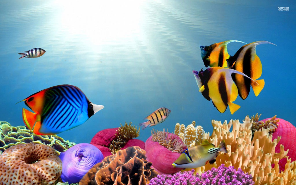 tropical fish wallpaper