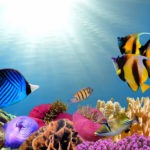 35 Beautiful Freshwater Tropical Fish Pictures