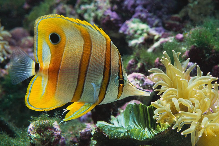 freshwater tropical fish pictures