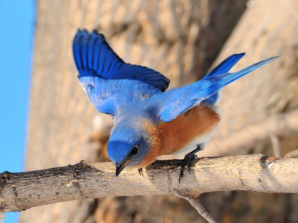 BlueBird pictures Hd