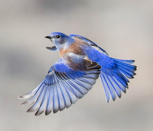 lovely bluebird pictures