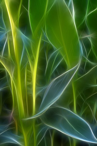 Nature Leaves for iPhone Wallpapers