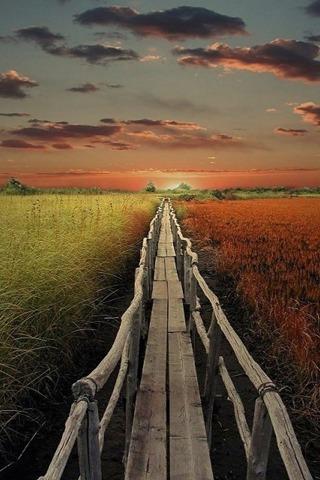 Nature iPhone wallpaper