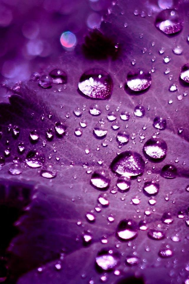 Purple iPhone Wallpapers