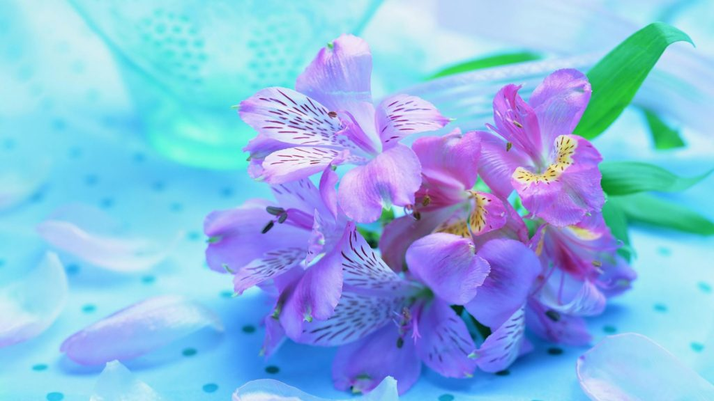 freesia - Flower Pictures