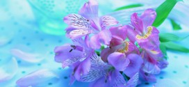 100 Beautiful Photos and Pictures of Flowers