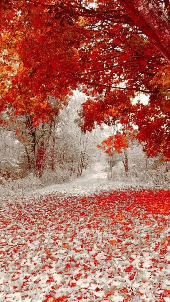 iPhone-5-Wallpaper-Nature-Red-Leaves