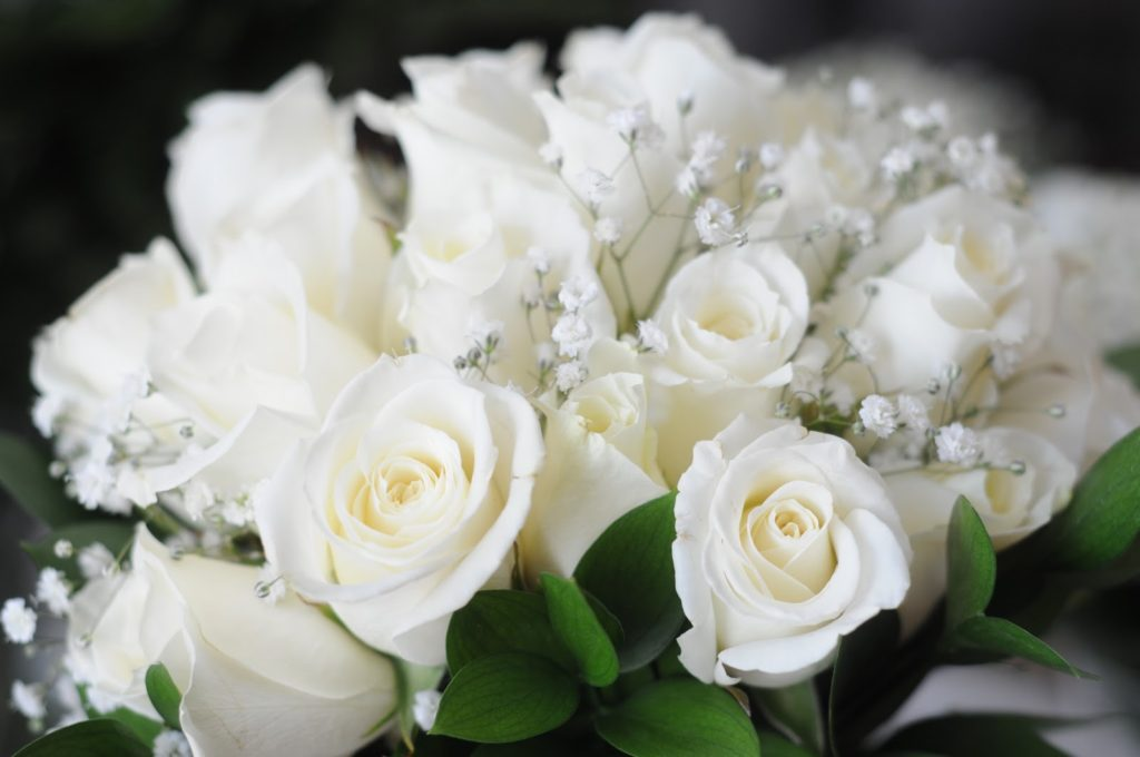 white rose - Pictures of Flowers